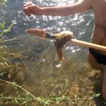 דייג באמצעות חץ וקשת