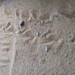 על חול יבש