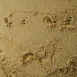 צב על חול רטוב
