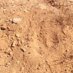 אמבטית חול של חגלה עם שקעי הרגליים