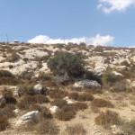 החוגלות מחפשות מקומות מוצלים במהלך הימים החמים