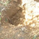 חפירות דרבן