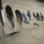 מימי לשמאל-נוצות גב,,כיפה,בין זנב לכנף,כנף,כנף
