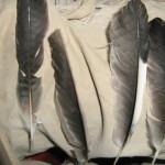 """מימין לשמאל-כנף,כנף,""""אצבעות"""",זנב"""