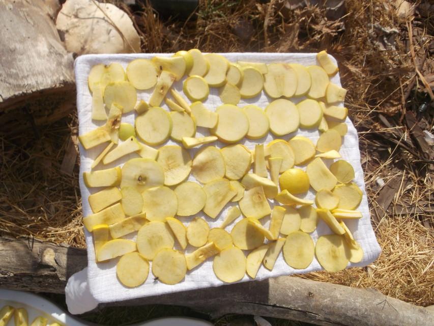 תפוחים לפני ייבוש